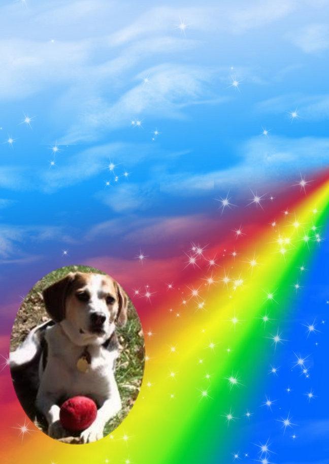 Rainbow Bridge Dog Rescue